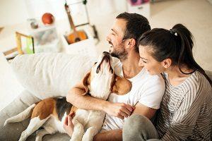 dog-tenants