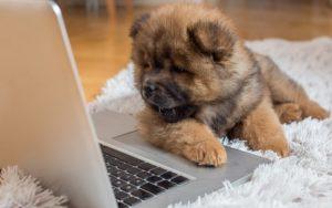 puppy-laptop