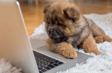 puppy-laptop